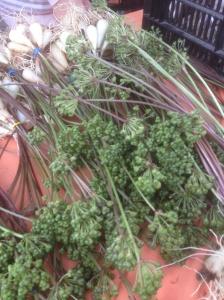 New union square green market finds!  @berriedtreasure #delposto